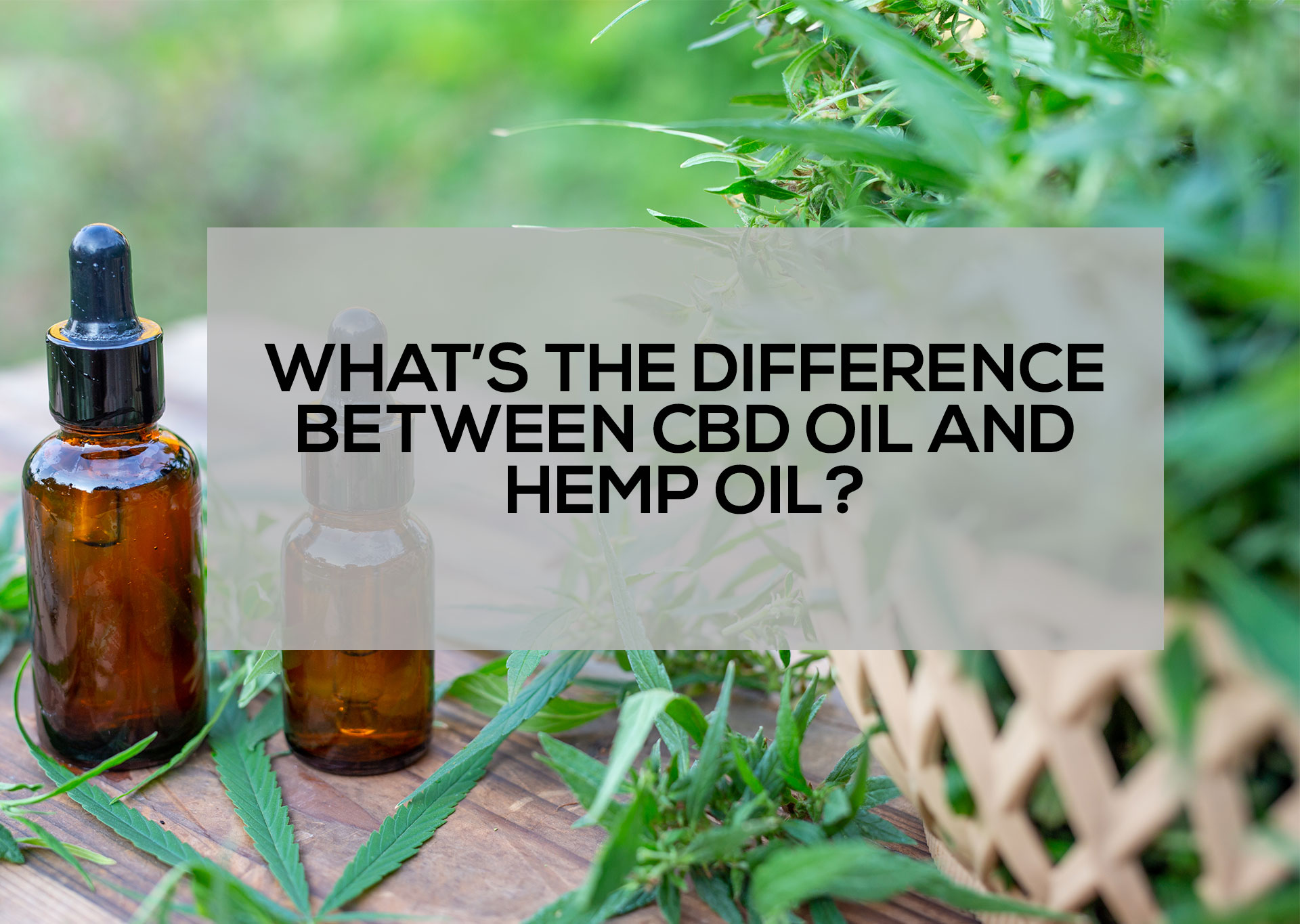 What's-the-Difference-between-CBD-Oil-and-Hemp-Oil